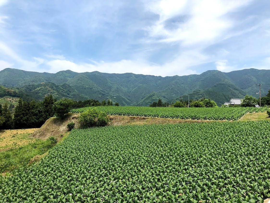http://ud.t.u-tokyo.ac.jp/blog/2019/06/08/_images/IMG_5550.jpg