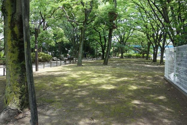 緑道.JPG